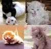 Kitten bg