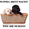 puppies arent....